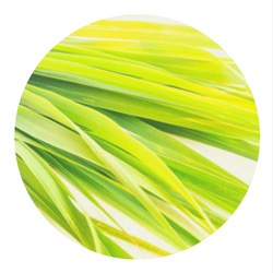 Экстракт Лимонной Травы